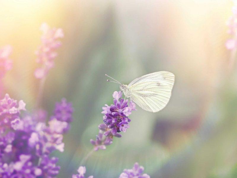 Butterfly Medicine: An Integrated Holistic Wellness Clinic